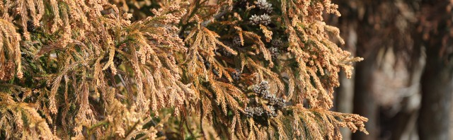 花粉症の季節