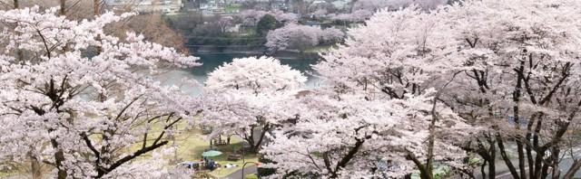 津久井湖さくらまつり