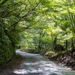 ゲートが開いていた早戸川林道を終点まで走ってみました